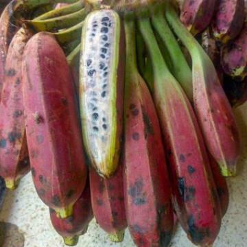 Banan himalajski (Musa itinerans var. itinerans) nasiona