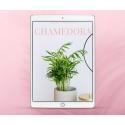 Zestaw trzech e-booków o palmach: Areka, Kencja i Chamedora