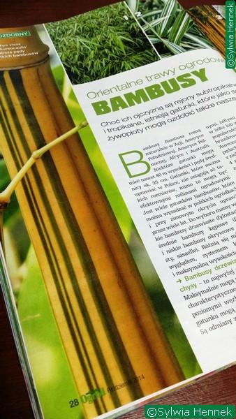 bambusy-orientalne-trawy-w-ogrodzie-sylwia-hennek