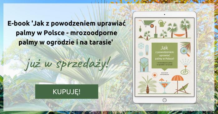 Ebook Jak z powodzeniem uprawiać palmy w Polsce - mrozoodporne palmy w ogrodzie i na tarasie